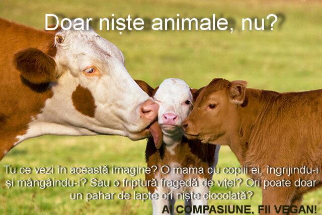 animalele su sentimente