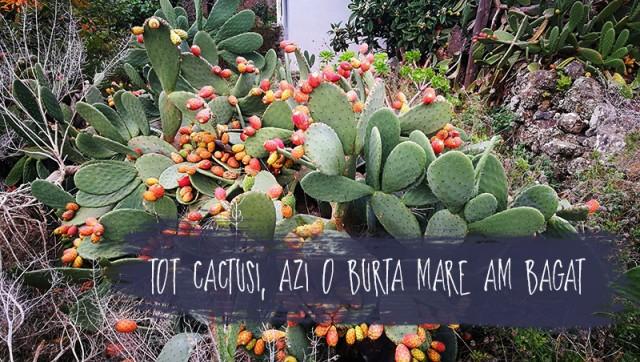 cactusi-2